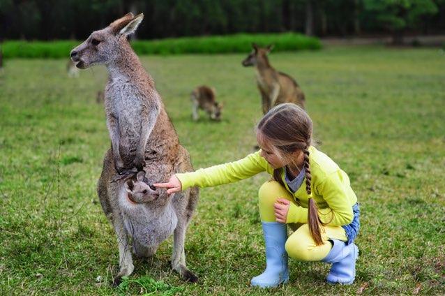 cote voyage est australie kangourou