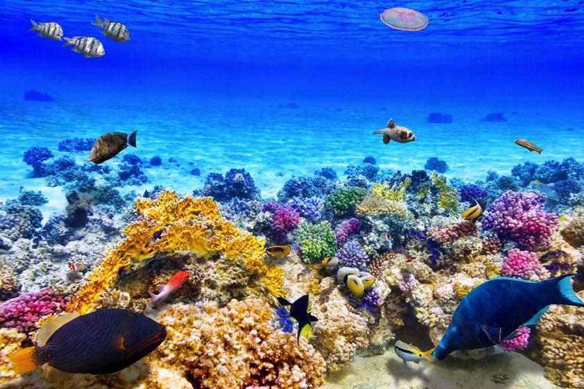 voyage australie grande barriere de corail