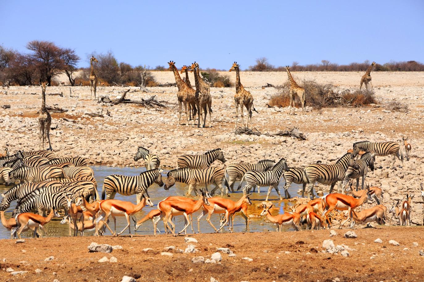 road trip afrique du sud voyage safari Soweto
