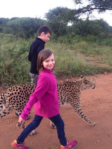 road trip afrique du sud voyage safari parc