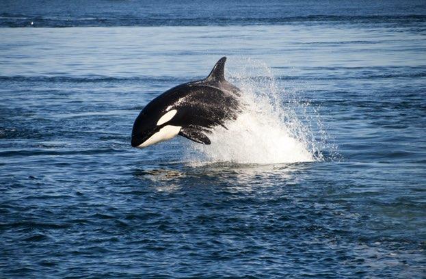voyage nouvelle zelande kaikoura baleine