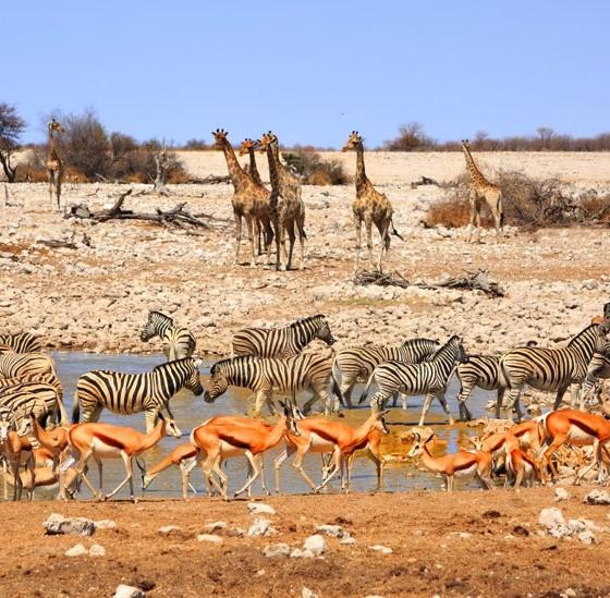 voyage afrique du sud safari