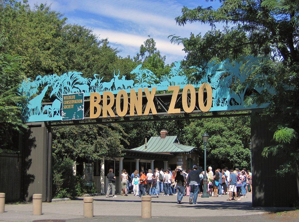 Bronx voyage état unis citytrip new york