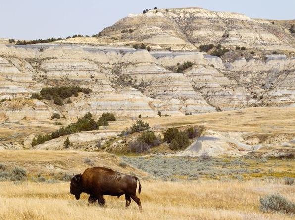 Voyage Dakota du Nord Parc National Théodore Roosevelt