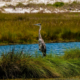 Everglades road trip usa etats unis floride