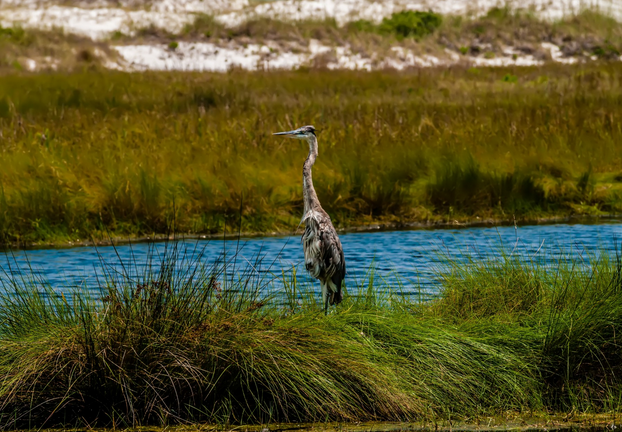 Everglades road trip usa etats unis floride